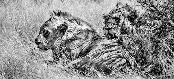 Geschützt: Namibia.  Wilde Tiere soweit das Auge reicht.